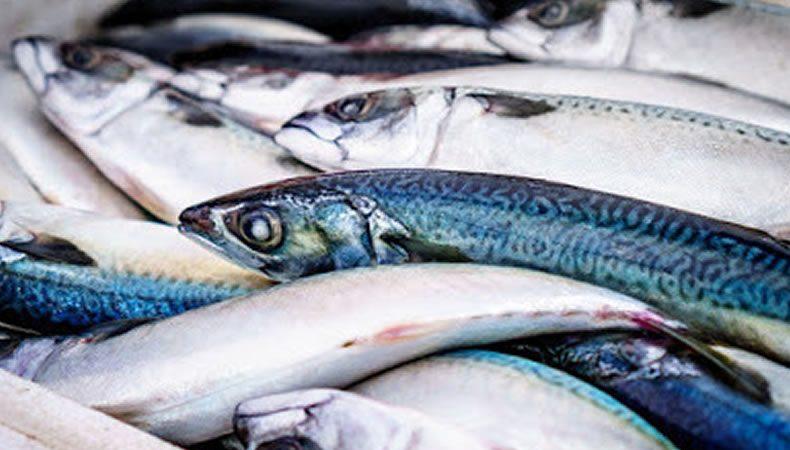 pesce azzurro fresco su un banco in pescheria