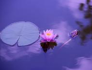 foto di un fiore di loto in un lago blu