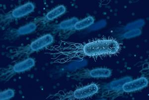 cellule batteriche responsabili della cistite