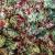 mix di quinoa con broccoli e peperoni cruschi
