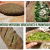 rotolo integrale ripieno di broccoletti e primosale